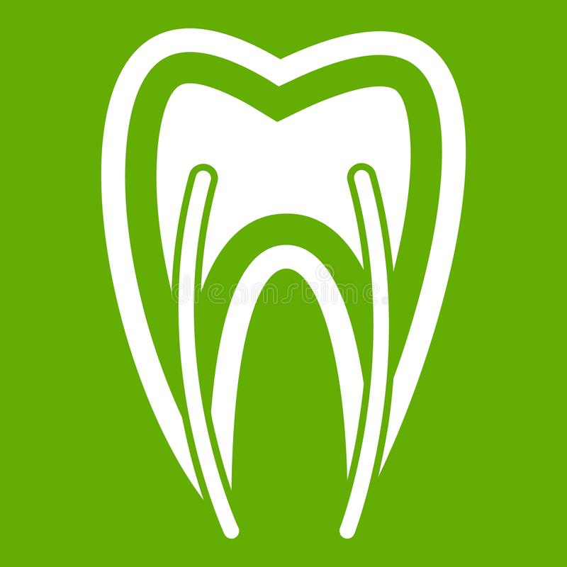 Tooth cross section icon green royalty free illustration