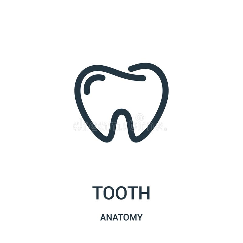 Tooth icon vector from anatomy collection. Thin line tooth outline icon vector illustration. Linear symbol for use on web and. Mobile apps, logo, print media stock illustration