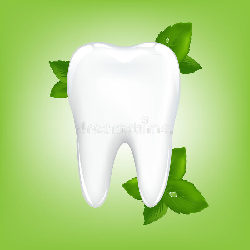 Download Tooth With Mint. Vector stock vector. Illustration of freshness - 15840169