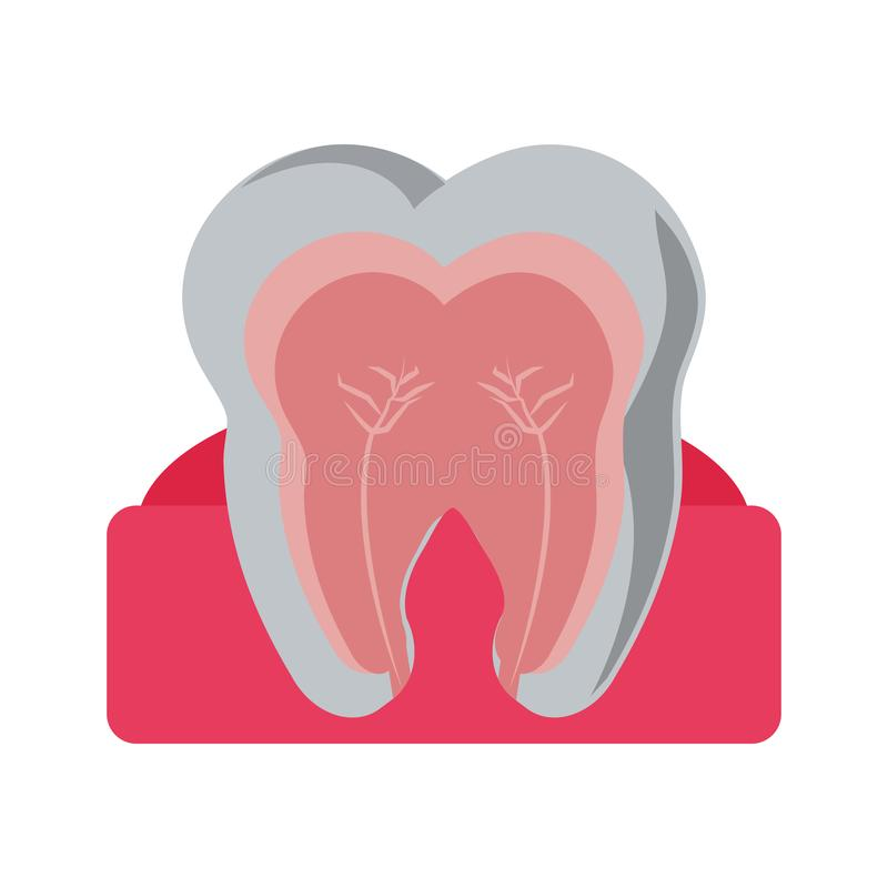 Tooth with nervous in gum. Vector illustration graphic design royalty free illustration