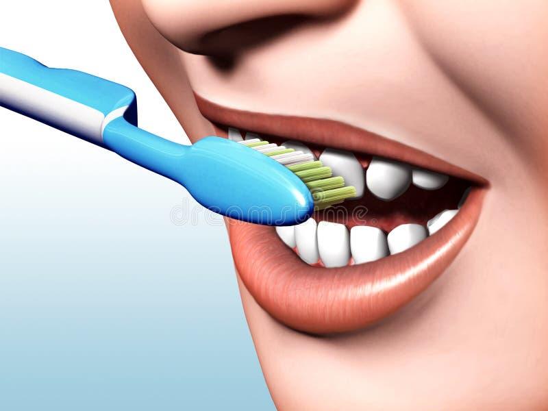 toothbrushing 库存例证
