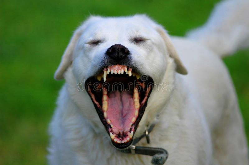 Toothy Hond stock afbeelding