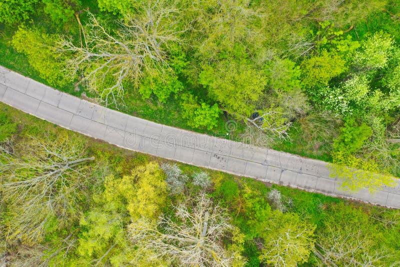 Top aéreo abajo de la opinión sobre el camino concreto quebrado viejo que pasa a través de bosque de hojas caducas verde estupend foto de archivo