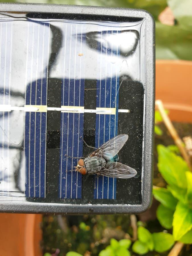 Top abajo panel solar de OM de la visión del pequeño con la mosca grande, cierre para arriba imagenes de archivo
