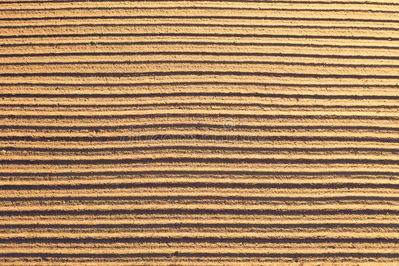 Top aerial view of on smooth borozy freshly planted agriculture plants in the soil royalty free stock photo