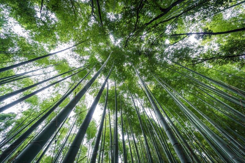 Top de la arboleda de bambú de Arashiyama de Kyoto, Japón imágenes de archivo libres de regalías