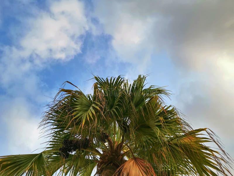 Top de la palmera contra el cielo nublado azul foto de archivo libre de regalías