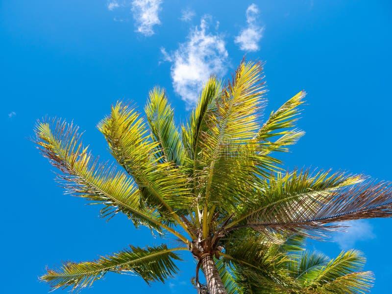 Top de una palmera contra el cielo azul brillante foto de archivo libre de regalías