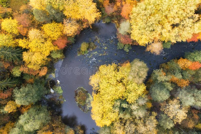 Top down drone shoot over colourful trees and curving river at warm autumnal day. royalty free stock photo