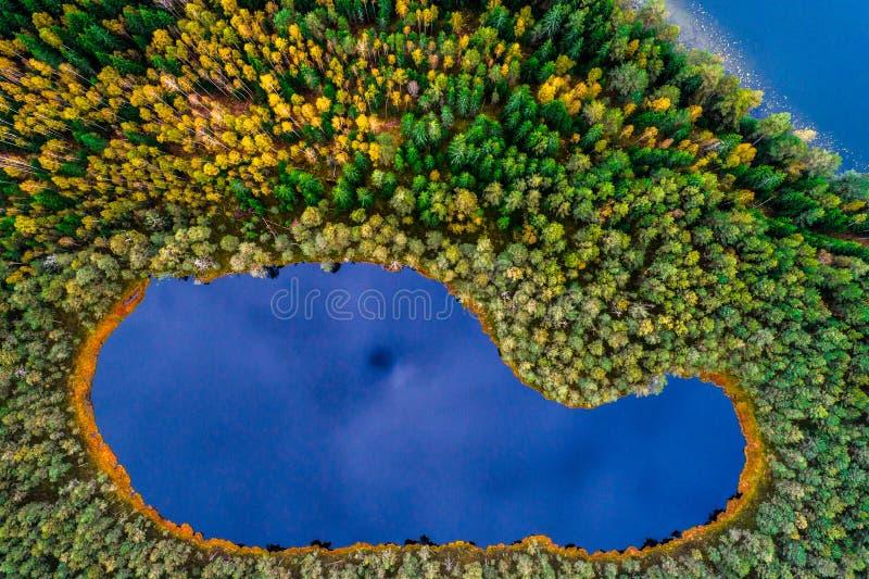 Top down mening van meer in bos royalty-vrije stock foto's