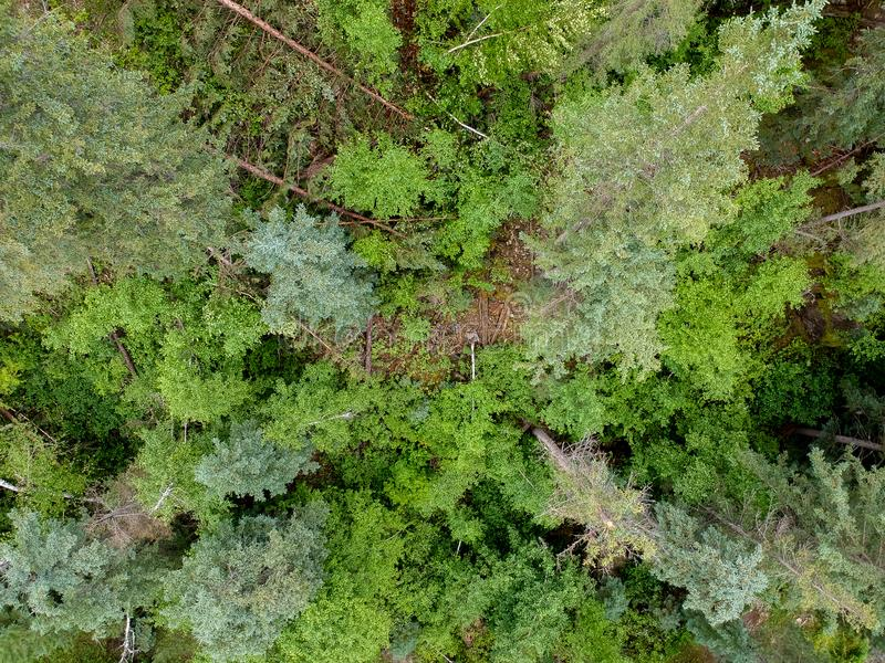 Top down view of forest trees in spearfish canyon South Dakota royalty free stock photos