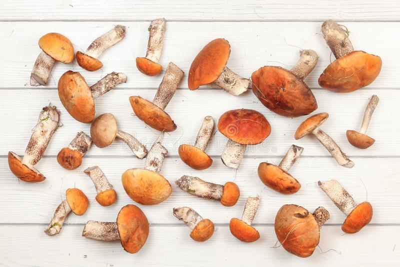 Top down view - fresh harvested forest mushrooms, red-capped scaber stalk variety Leccinum aurantiacum / albostipitatum, on. White boards desk stock image