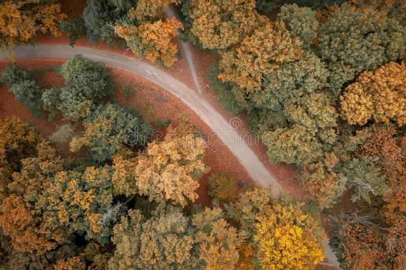 Top down view on path and autumn trees on park. Poland royalty free stock photography