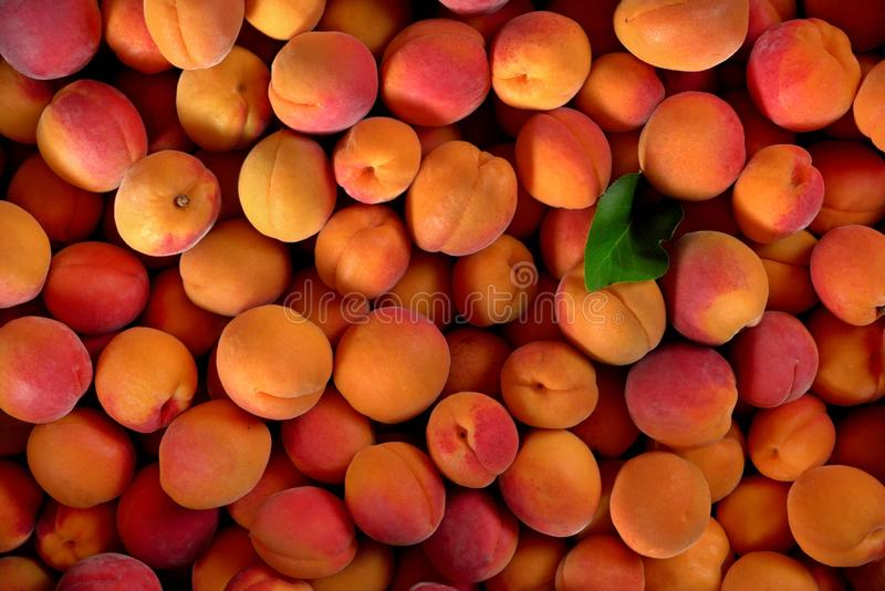 Top down view, pile of apricots, and one green leaf stock image