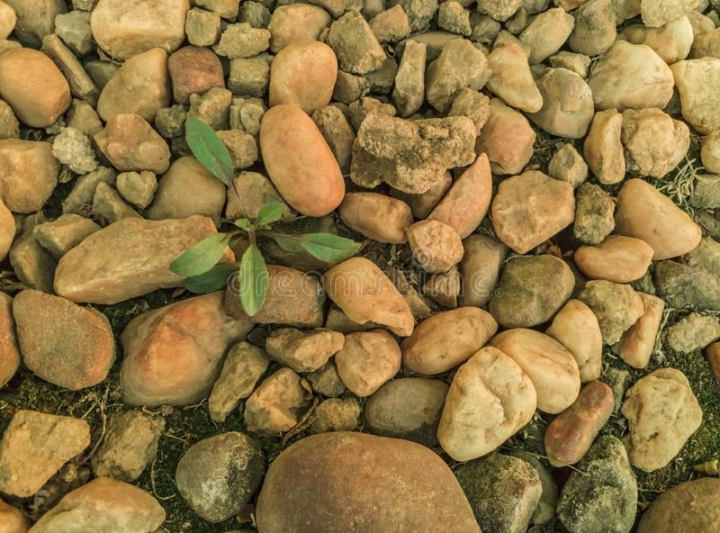 Plant survival among rocky landscape. Top down view of a plant surviving among a rocky landscape including many small rocks and pebbles royalty free stock image
