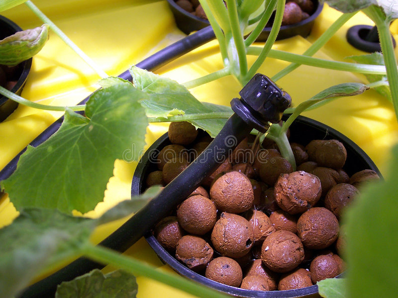 Top Feed Hydroponics or Driponics stock photo