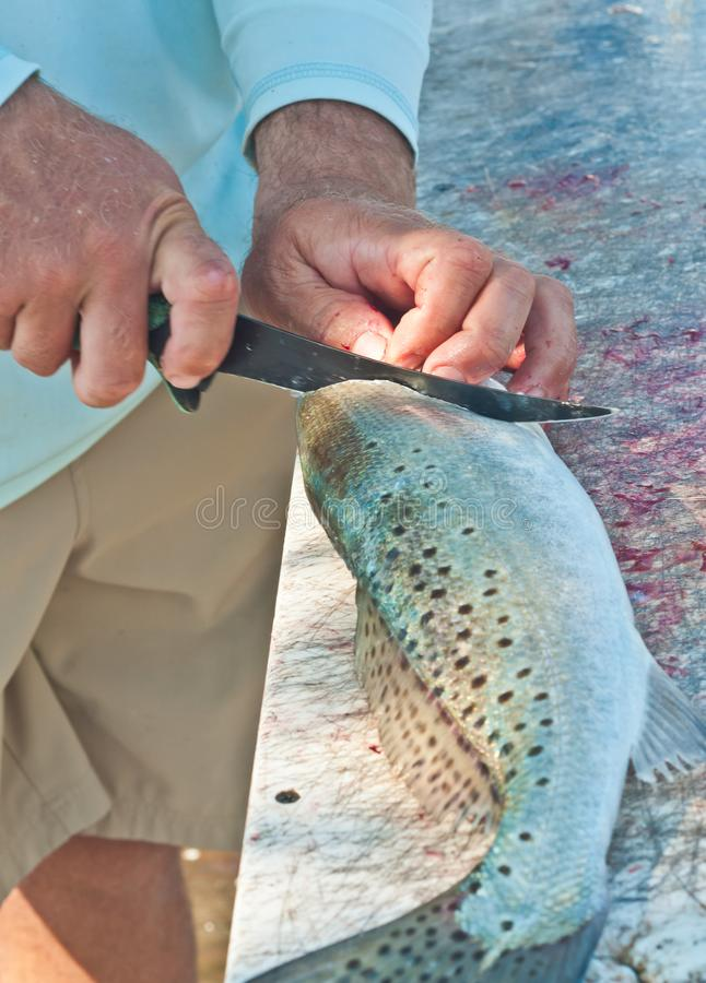 Fisherman filleting sea trout fish at a tropical marina cleaning station. Top, front view, medium distance of the hands of a fisherman, filleting a sea trout stock photos
