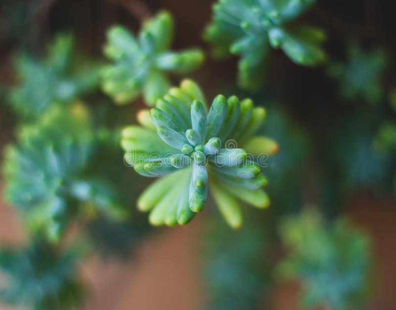 Top macro view of green plant cactus stock photography
