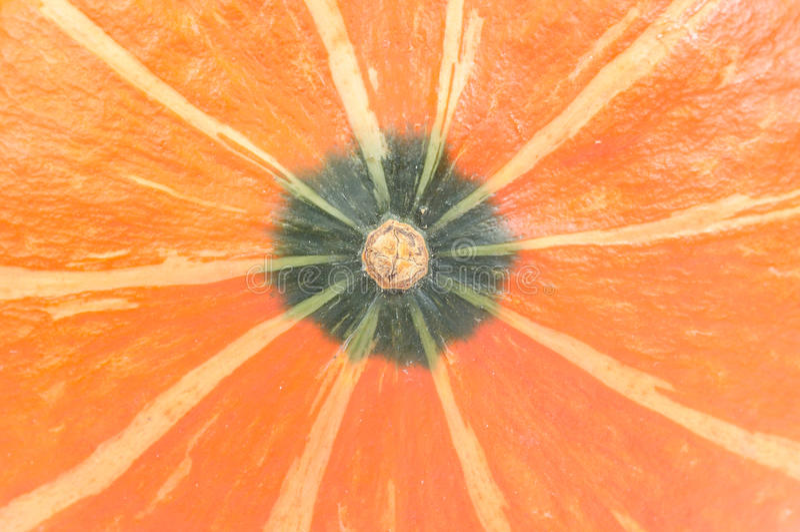 Top of Pumpkin