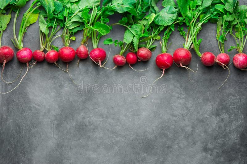 Top row of fresh raw organic red radishes with green leaves on dark concrete stone. Vegan gardening stock photo