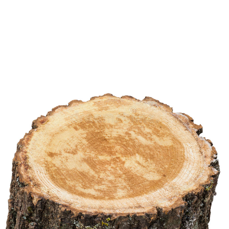 Top of stump log. Fire wood - isolated on white background royalty free stock images