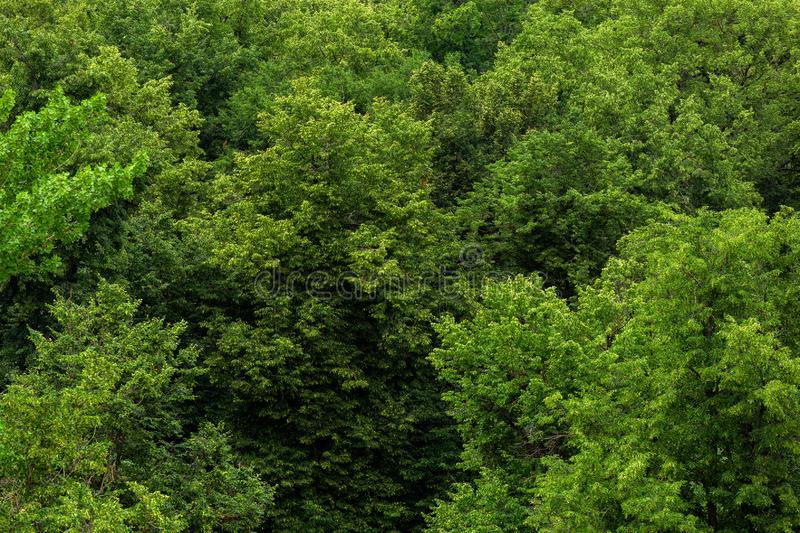 Top of summer green linden forest solid foliage pattern background stock photography