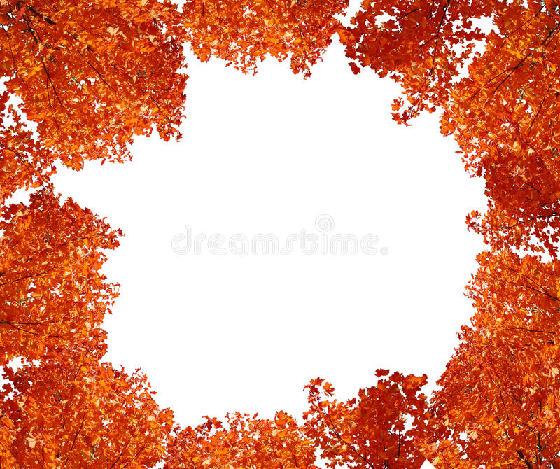 Download Top tree in autumn. stock photo. Image of branch, autumn - 12233508