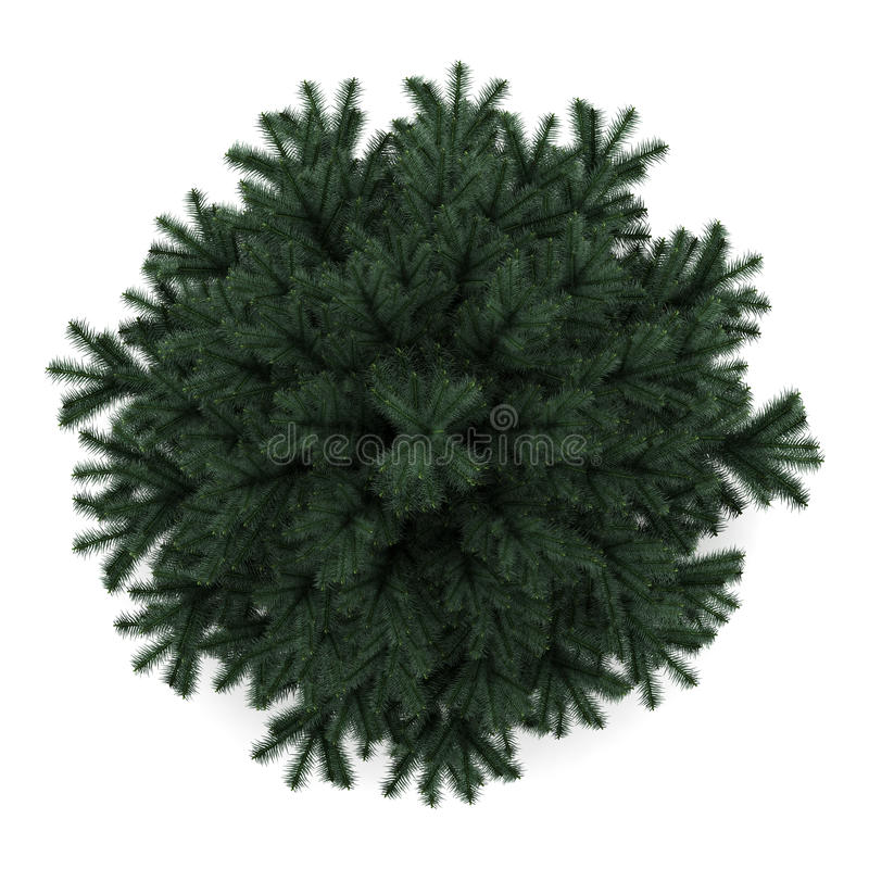 Download Top View Of Alpine Fir Tree Isolated On White Stock Illustration - Illustration: 25974783