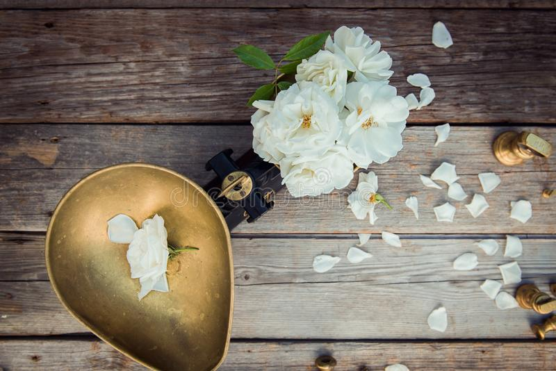 Top view antique vintage measuring scale weights with fresh white tea rose flowers on the rustic wooden background. Nature royalty free stock image