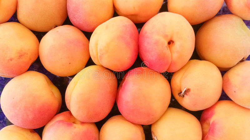 Top View of Apricots. Top View of Fresh Apricots royalty free stock photos