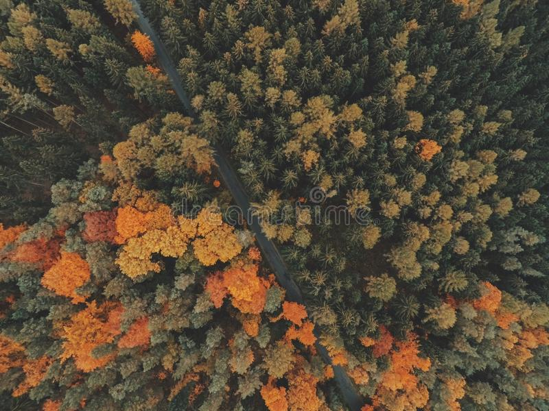 Top View Of Autumn Forest Free Public Domain Cc0 Image