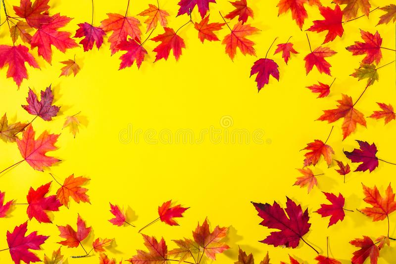 Top view Autumn frame from fallen red maple leaves on textured bright yellow paper. Colorful autumn template made of foliage. Sele stock photo