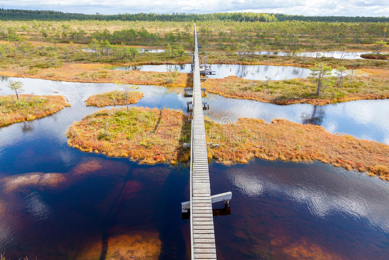 Top view of autumn landscape. Huge bog in Estonia stock images