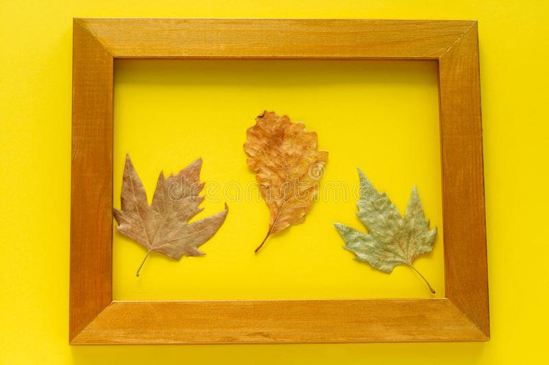 autumn leaves in a golden frame isolated on bright yellow background stock photography