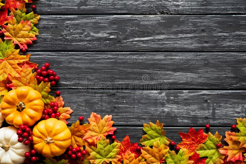 Top view of Autumn maple leaves with Pumpkin and red berries on old wooden backgound. Thanksgiving day concept royalty free stock photos