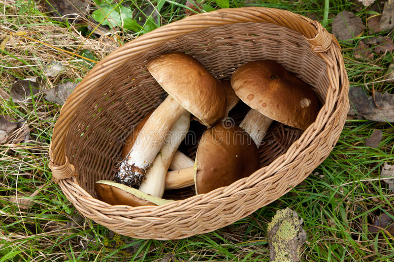 Top view of basket with some edible mushrooms