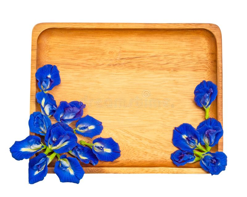 Top view of beautiful blue Butterfly pea, known as bluebell vine or Asian pigeon wings, decorate on fram of a brown wooden plat. Isolated on white background stock image