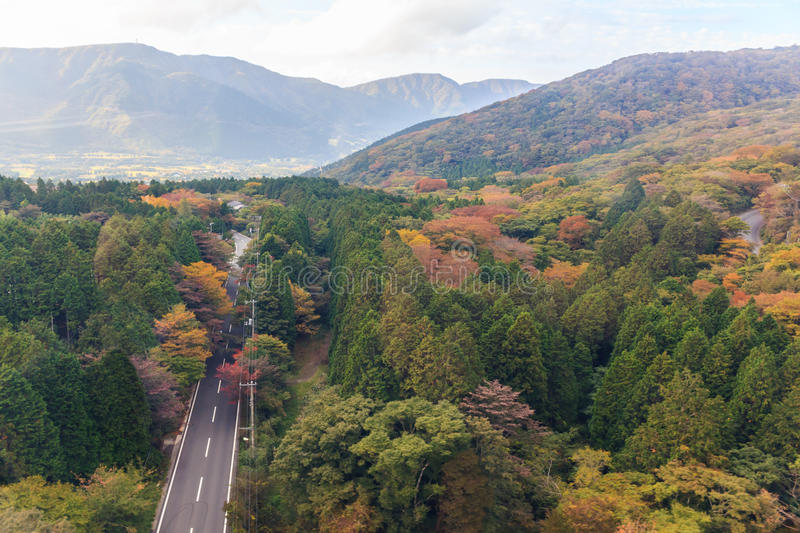Top view of beautiful forest of autumn leaves. Top view of beautiful forest of autumn leaves in Hakone, Japan royalty free stock image