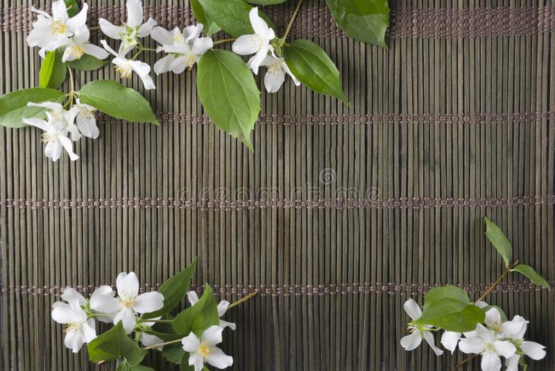 Top view of beautiful jasmine flowers on the wicker mat, empty space for design royalty free stock photos