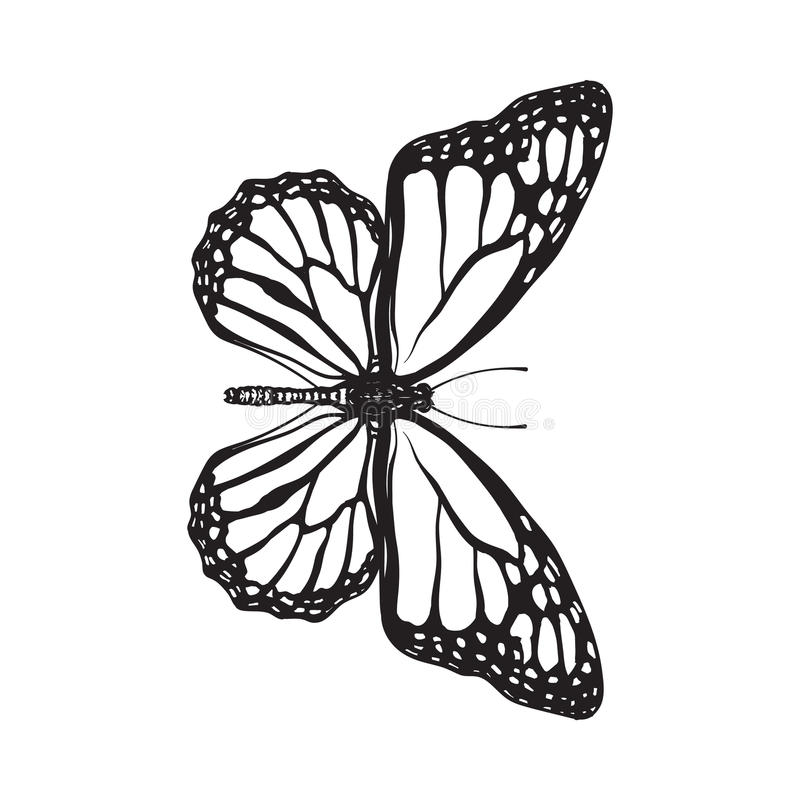 Top view of beautiful monarch butterfly, isolated sketch style illustration royalty free stock images
