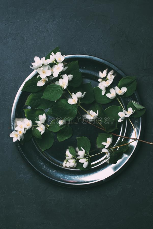 top view of beautiful white blooming jasmine flowers on shiny stock photography
