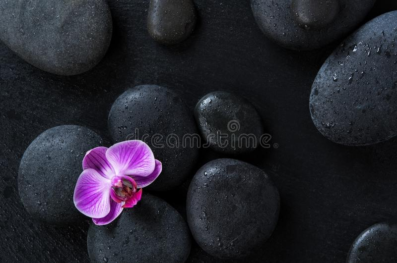 Orchid on black spa stones stock photos