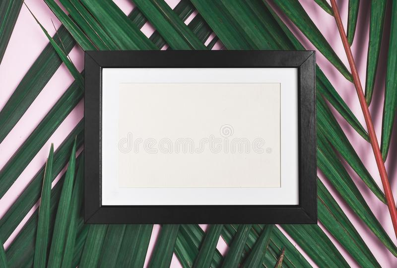 Top view blank black photo frame on green palm leaf on pastel pi. Nk table top background.Summer vacation backdrop.Mock up for display design and text royalty free stock photo
