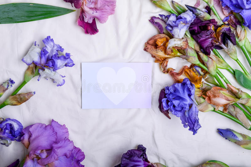 Top view blank card with white heart among colourfull irises flower de luce on bad sheet background. Flatlay, selective focus. L. Ove, care and tenderness royalty free stock photography