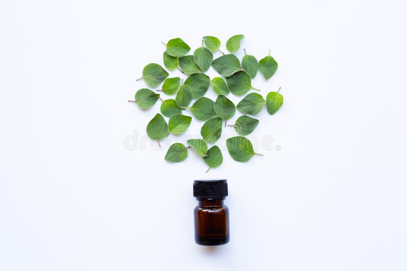 Top view. Bottle of essential oil with oregano on white royalty free stock photos