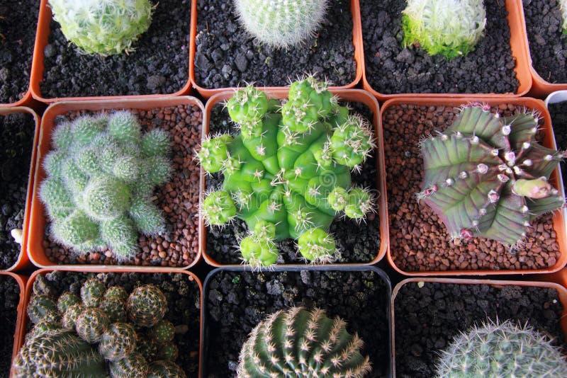 Top view cactus garden ,center focus. stock photos