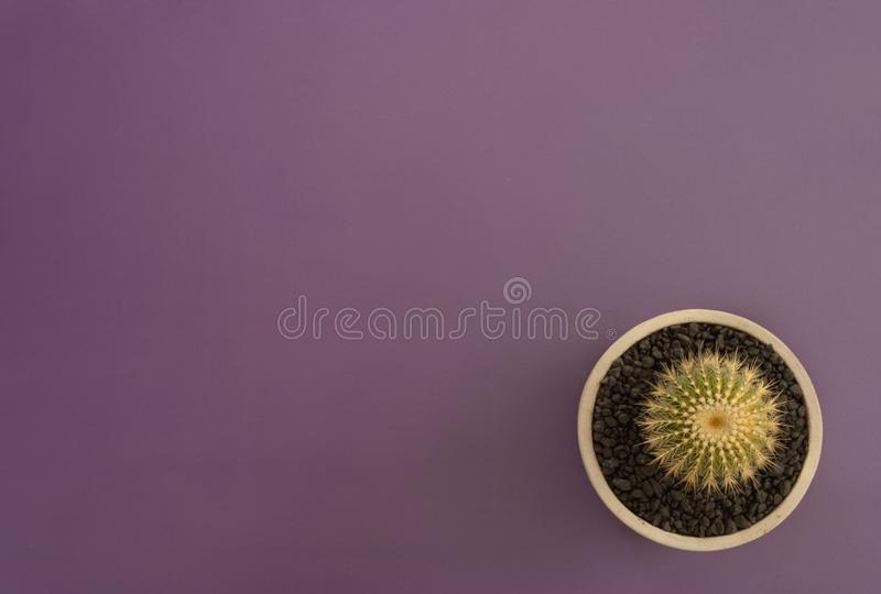 Top view of cactus on violet background royalty free stock images