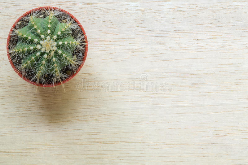 Top view of a Cactus stock images