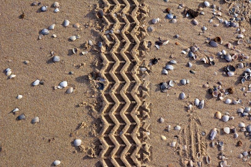 Car tire tracks leading through sand beach background royalty free stock photo