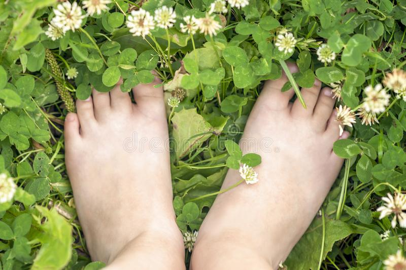Top view close up of child`s bare feet on the green grass royalty free stock photo